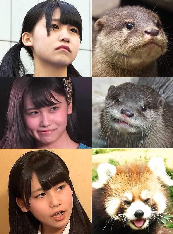 kojimako otter
